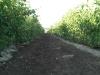 vineyard-3.jpg