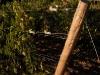 vineyard-7.jpg