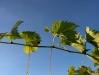 vineyard-9.jpg