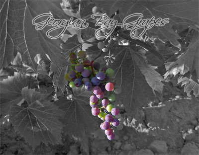Georgian Bay Grapes